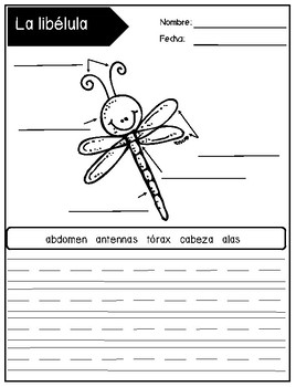 Spanish Unit on Insects