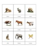 Spanish Vocabulary Flash Cards