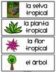 Spanish and English Rainforest Habitat Vocabulary