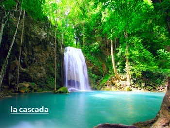Spanish lesson letter S, rainforest, selva, animals, sights and sounds