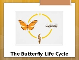 Special Education Science - Foundational Text - Life Cycle of a Butterfly