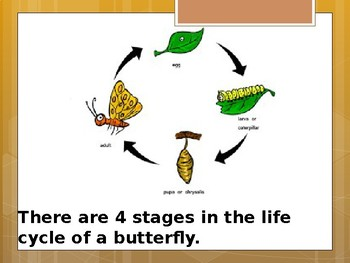 Life Cycle of a Butterfly - Special Education Science - Foundational Text
