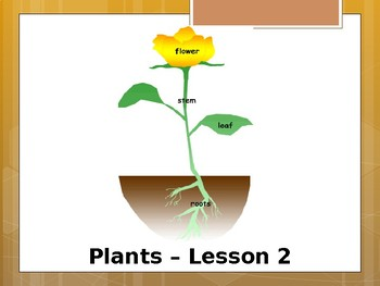 Special Education Science - Foundational Text - Parts of a Plant