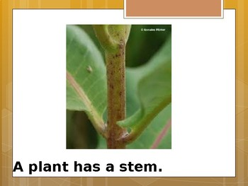 Parts of a Plant - Special Education Science - Foundational Text