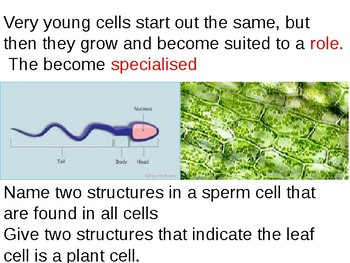 Specialised cells
