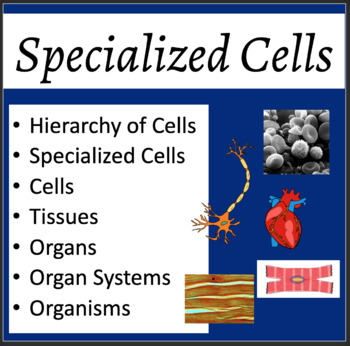 Specialized Cells Lesson - Biology PowerPoint Lesson & Stu