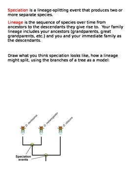 Speciation - Evolution Lesson