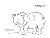 Species At Risk Colouring Sheet: Grizzly Bear