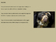 Spectacled Bear - Power Point Facts Information Endangered