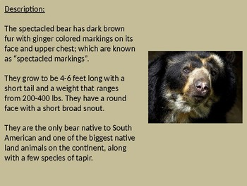 Spectacled Bear Power Point - information facts review