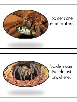 Spectacular Spiders: A Research and Informational Writing Unit for 1st Grade