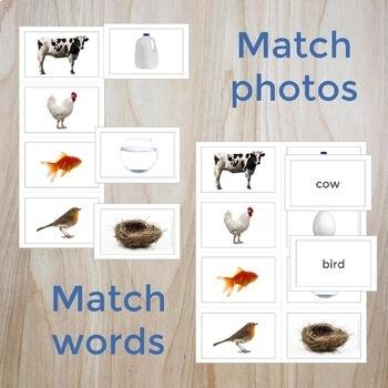 Photo Cards - Speech, Language, Vocabulary, ELL, Phonemic Awareness