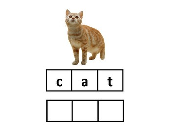 Spelling Animals Adapted Work Binder