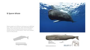 Sperm Whale Balanced Reading PowerPoint Presentation