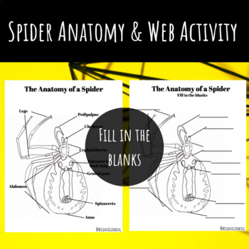 Spider Anatomy & Web Activity