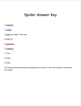 Fun Spider Assessment