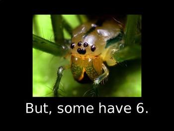 Spider Eyes