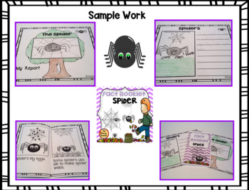 Spider Fact Booklet