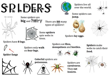 Spider Information Report Visual