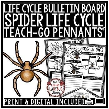 Spider Life Cycle Activity • Teach- Go Pennants™