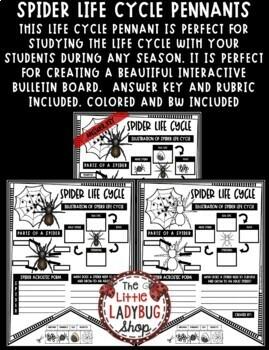 Spider Life Cycle Activity- Arachnids Study • Teach- Go Pennants™
