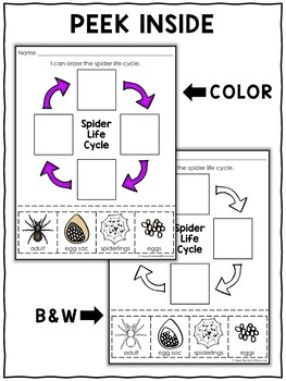 Vocabulary Activity - Spider Life Cycle