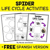 Spider Life Cycle Activities