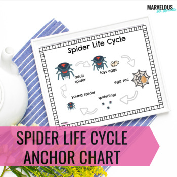 Spider Life Cycle Anchor Charts