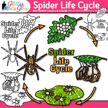 Spider Life Cycle Clip Art {Great for Animal Group, Insect, & Bug Resources}