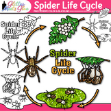 Spider Life Cycle Clip Art   Great for Animal Group, Insect, & Bug Resources