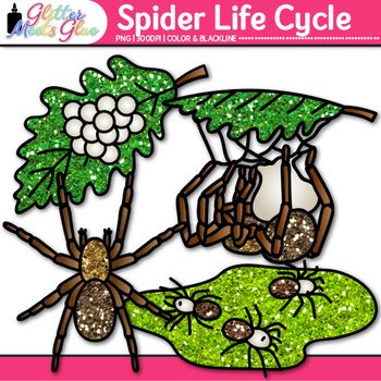 Spider Life Cycle Clip Art | Great for Animal Group, Insect, & Bug Resources