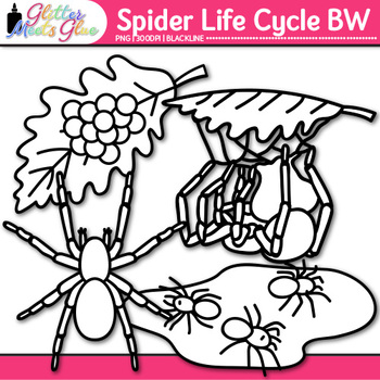 Spider Life Cycle Clip Art {Great for Animal Group, Insect, & Bug Resources} B&W