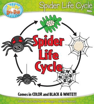 spider life cycle clipart  zip a dee doo dah designs  tpt teacher clip art websites teachers clipart