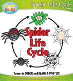 Spider Life Cycle Clipart {Zip-A-Dee-Doo-Dah Designs}