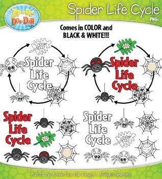 Spider Life Cycle Clipart {Zip-A-Dee-Doo-Dah Designs}