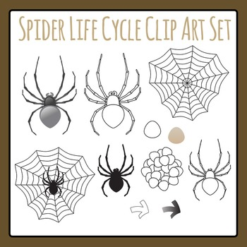 Spider Life Cycle Clip Art Set for Commercial Use