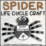 Spider Life Cycle Craft