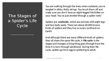Spider Life Cycle FULL VERSION, No-print, interactive, Halloween