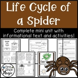 Spider Life Cycle Informational Text and Activity Sheets