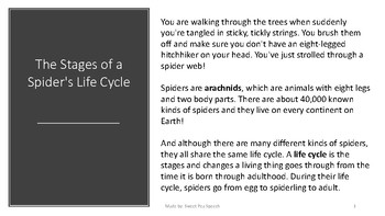 Spider Life Cycle LITE