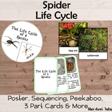 Spider Life Cycle Pack With Real Photos Insects Montessori Preschool Science