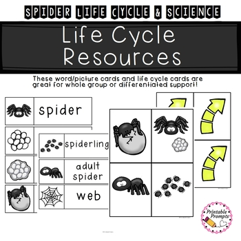 Spider Life Cycle & Science