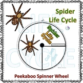 Wolf Spider (Life Cycle Spinner)