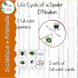 Spider Life Cycle Spinners & Cards D'Nealian