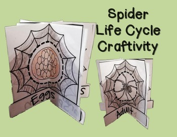 Spiders Minibook- Habitats, Life Cycle and Adaptations