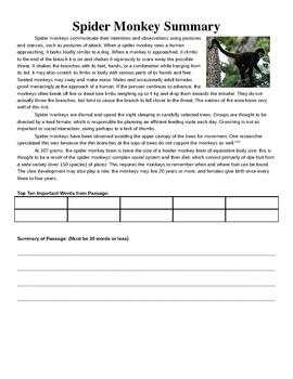 Spider Monkey Summary