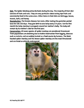 Spider Monkey - informational article lesson facts questions word search