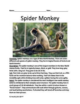Spider Monkey - informational article lesson facts questio