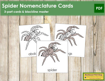 Spider Nomenclature Cards