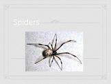Spider PowerPoint
